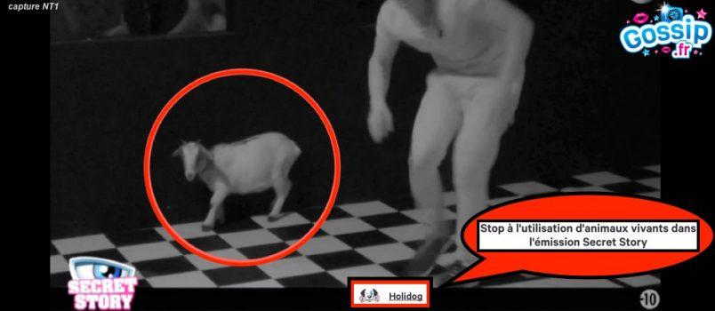 #SS10: Le public dénonce la maltraitance d'animaux durant le prime!