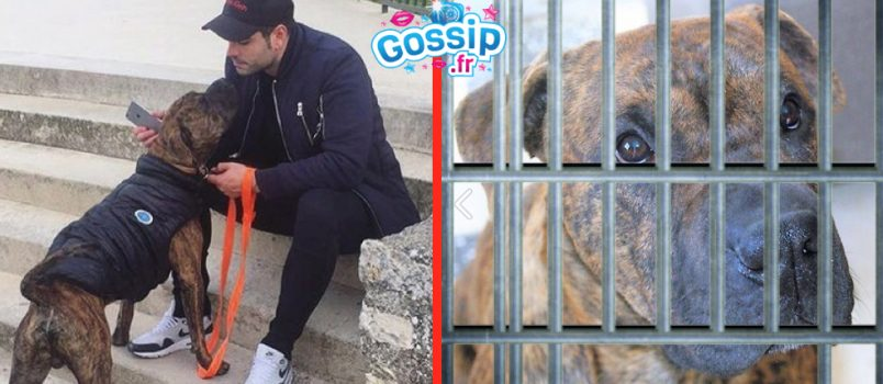 EXCLU! Ricardo et Nehuda: Leur chien, Tyson, lâchement abandonné dans une fourrière!